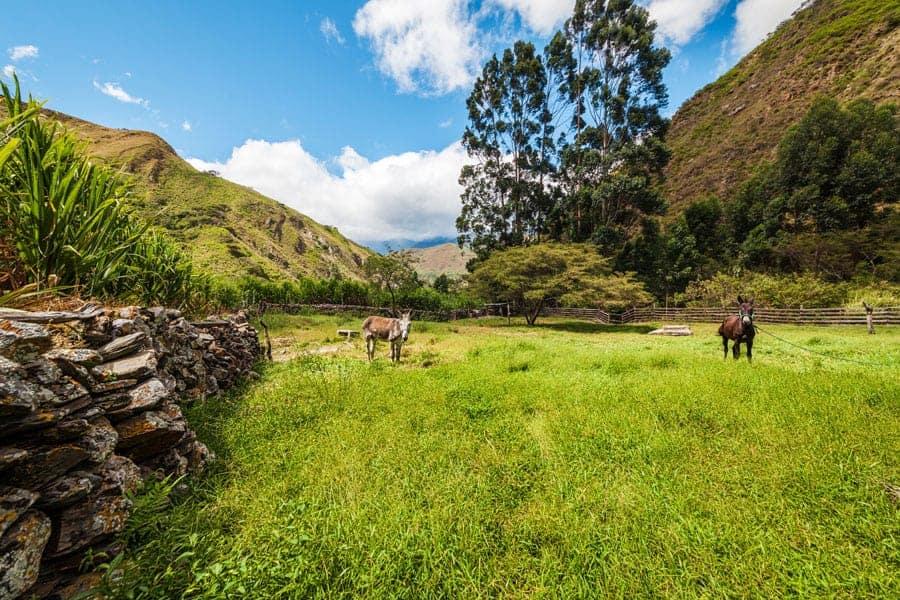real estate market in rural Ecuador