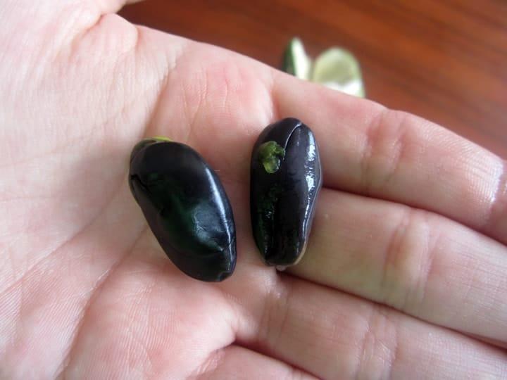 guaba-seeds-ecuador