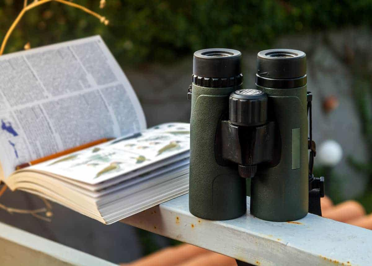Best compact binoculars for birding