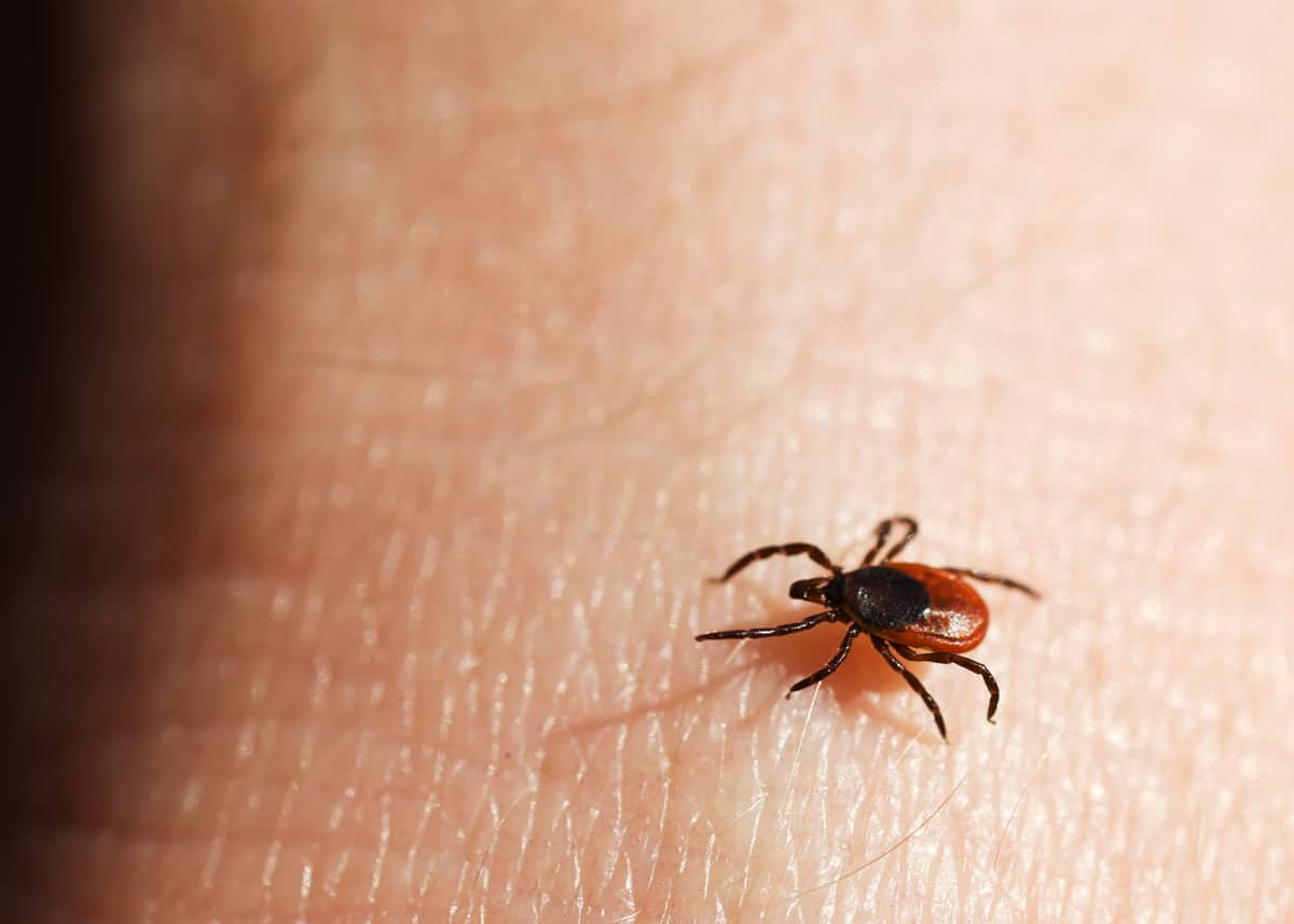 How to kill ticks in your yard