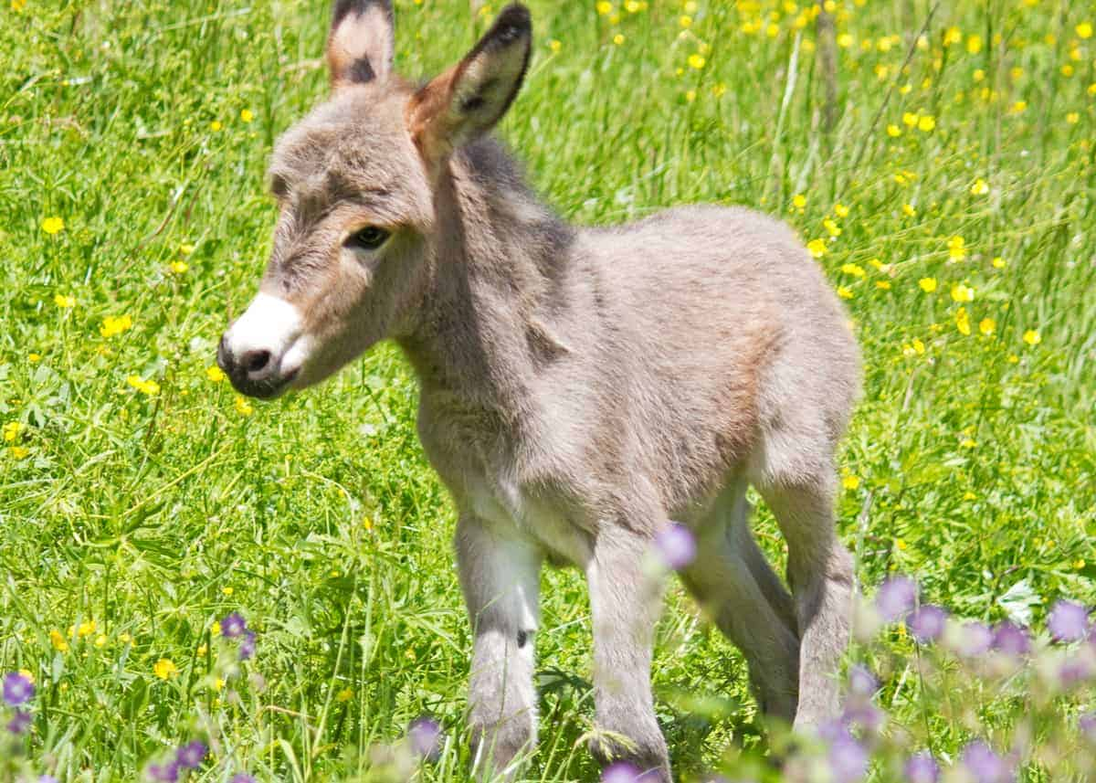 learn about donkeys